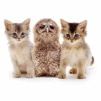 3d-cardB-animals